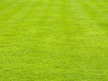 Lawn In Spring Stock Photography