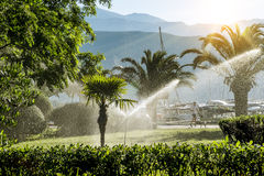 Lawn irrigation system for watering the vegetation  at dawn Royalty Free Stock Images