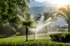 Lawn irrigation system for watering the vegetation  at dawn Royalty Free Stock Image