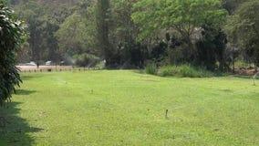 Lawn Irrigation Video stock video
