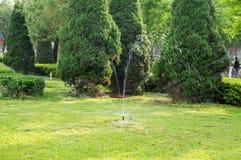 Lawn Irrigation Stock Image