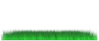 Lawn of juicy grass