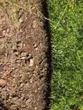 The lawn-land boundary. View from above. the photo is divided into two parts, green and brown royalty free stock image