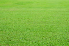 Lawn. Large lawn in the capital Royalty Free Stock Image