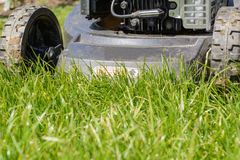 Lawn with lawnmower cultivating - detail royalty free stock image