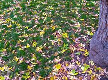 Lawn with leaves 1 Stock Photos