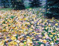 Lawn with leaves 2 Royalty Free Stock Image