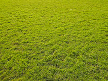 Lawn in light Stock Photography