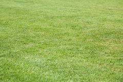 Lawn of Lush Green Grass for Background Royalty Free Stock Images