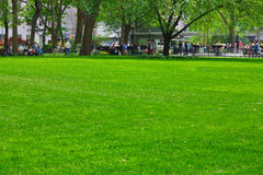 Lawn Madison Square Park NYC Royalty Free Stock Image