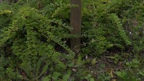 Lawn med grönt gräs lager videofilmer