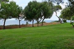 Lawn med trees arkivfoton