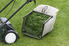 Lawn mower. Bucket full of freshly cut grass Royalty Free Stock Image