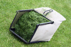 Lawn mower basket. Full of freshly cut grass lying on the lawn Stock Photo