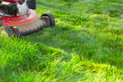 Lawn mower cutting green grass. Work in the garden Stock Image