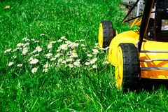 Lawn mower and daisies. Lawn mower passing by a patch of daisies Royalty Free Stock Photos