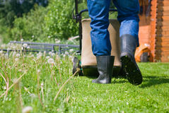 Lawn stock photography