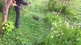 Lawn mower man cut grass with electric trimmer. Slow motion Field of dandelions. stock footage