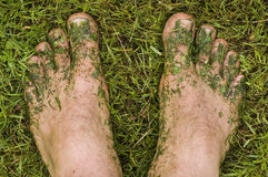 Lawn mower's feet. Feet covered with mowed grass Royalty Free Stock Photo
