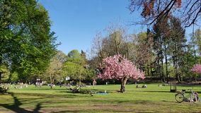 Lawn in the Municipal Park in Pankow in Berlin in spring Royalty Free Stock Images