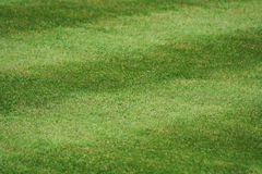 A lawn of neatly mown grass, 45deg to the stripe, 5 stripes Royalty Free Stock Image