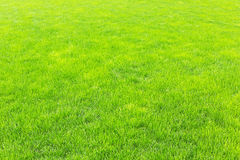 Lawn with new green grass Stock Photo