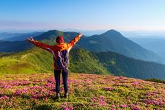 The lawn with the nice bushes of rhododendrons. The tourist with back sack rising up her arms hugging the mountains. Summer day. The lawn with the nice bushes royalty free stock image