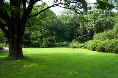 Lawn with an old tree. Lawn in a botanical garden in Moscow with an old tree stock photo