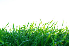 Lawn On White Royalty Free Stock Photos