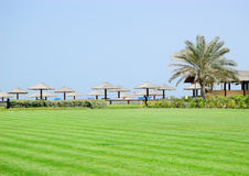 Lawn, palm and beach. United Arab Emirates Stock Photography