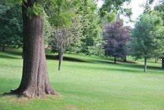 Lawn in the park. View of trees and a lawn field in a park Stock Photos