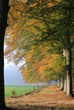 Lawn in park with coloured autumn trees and path of leaves Royalty Free Stock Photography
