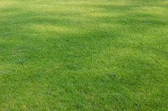 Lawn in park Royalty Free Stock Images