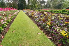 Lawn path. In a botanical garden - wide angle view stock image