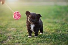 Lawn puppy stock photos