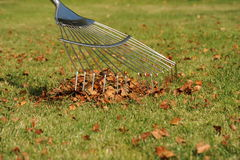 Lawn rake and autumn leaves. Photograph of a lawn rake raking up leaves on a lawn Royalty Free Stock Photos