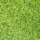 Lawn ( Real grass ) Stock Image
