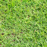 Lawn ( Real grass ) Stock Photography
