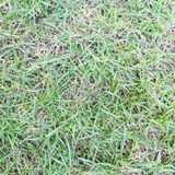 Lawn ( Real grass ) Royalty Free Stock Photos