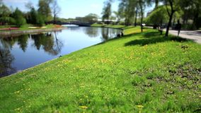 Lawn by the river Film Tilt. City Springtime  Landscape of a green field with trees and a bright blue river stock video footage