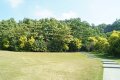 Lawn scenery. There are green trees, in Shenzhen Baoan Park, Chinese Stock Photography
