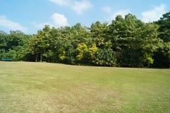 Lawn scenery Stock Photos