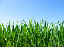 Lawn on sky Stock Photos