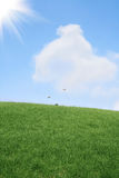 Lawn and sky Stock Image