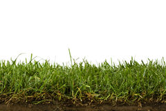 Lawn and soil cross-section isolated on white Stock Photography