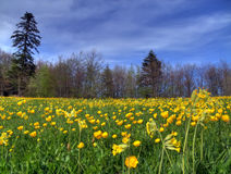 Lawn in spring stock image