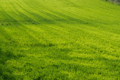 Lawn in spring Stock Images