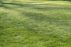 Lawn in spring park Royalty Free Stock Photo