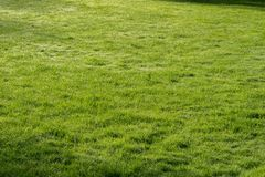 Lawn in spring park Stock Images