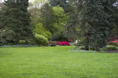 Garden lawn after spring rain. Nice healthy wet lawn and plants at a garden Stock Photos